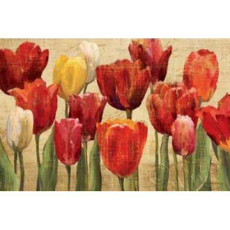 Tulip Fantasy on Cream Canvas Art - Marilyn Hageman (24 x 36)