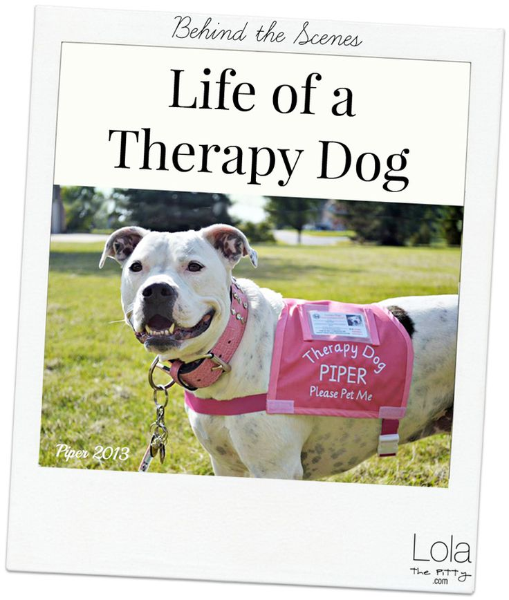 All About Therapy Dogs - Common Questions  Answers. @LolaThePitty