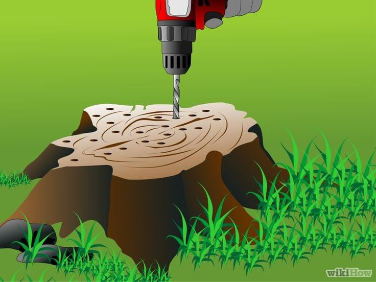 Kill a tree stump sierbomen en heesters pinterest tuin - Outs allee tuin ...