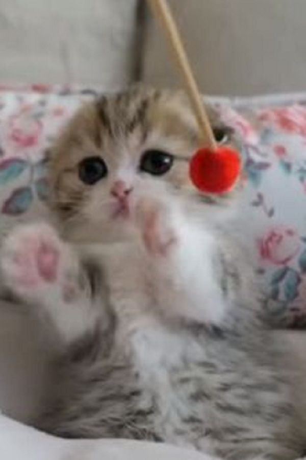 This Cuteness Will Touch Every Heart Video Cute Wild Animals Cute Cats And Dogs Kittens Cutest