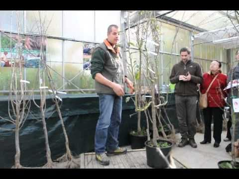 Taille des arbres fruitiers - YouTube
