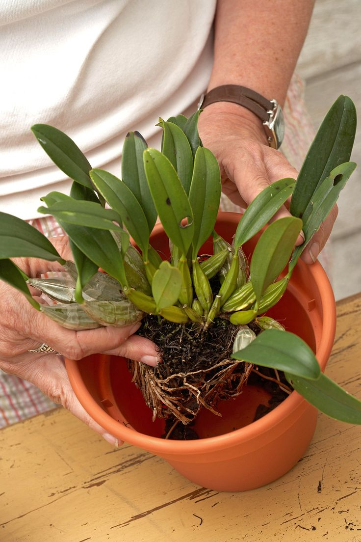 Here Is What You Need to Know About Orchid Containers