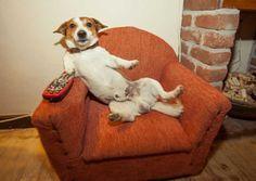 Conheça o 'Netflix dos pets' com programação para cães e gatos