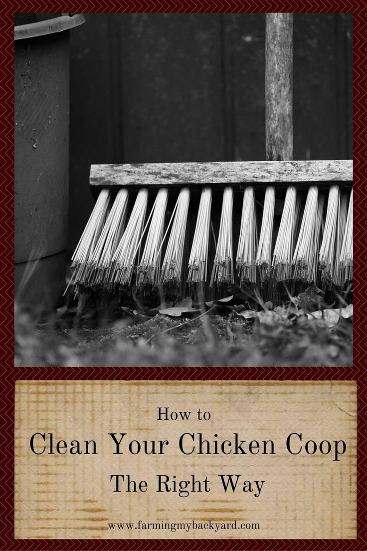 Clean your chicken coop the right way to make your chickens happy, prevent…