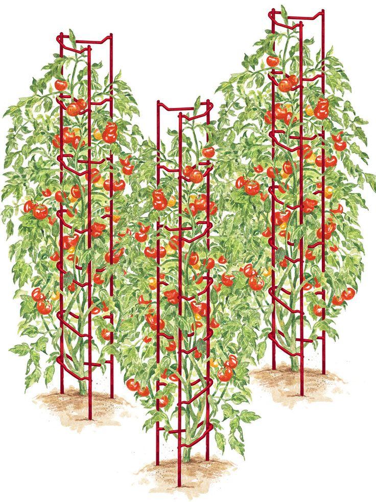 Estacas de tomate, jaulas de tomate, tomate Escaleras | Jardineros Supply