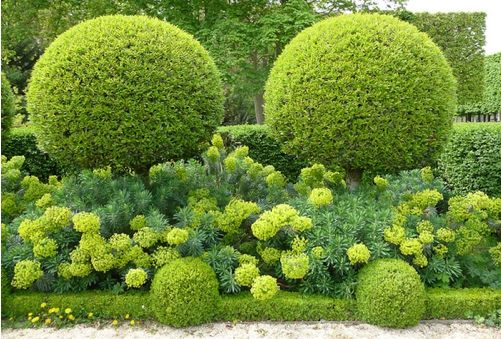 The Orangery garden park at the Chateau de Sceaux located in Sceaux, Hauts-de-Seine not far from Paris in France. Clipped Boxwood with Euphorbia characias. Photo by blogger Alain Delavie.