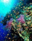 La morte della grande barriera corallina: per il reef non ci sono più speranze?