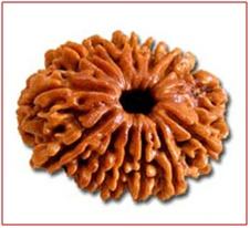 Buy original 13 Mukhi Rudraksh, price of 13 Mukhi Rudraksh, benifits of 13 Mukhi Rudraksh, 13 Mukhi Rudraksh in Delhi India