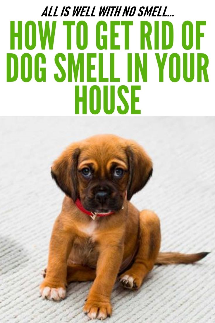 Living With A Dog Doesn T Mean Your House Has To Smell Like A Dog