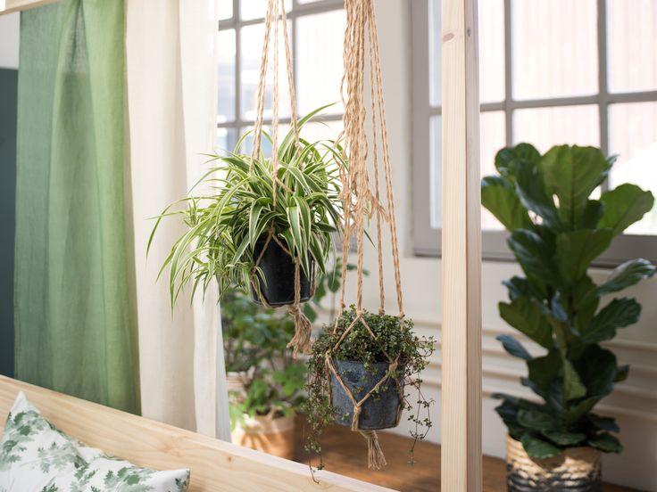 Schwebende Gärten fürs Zuhause