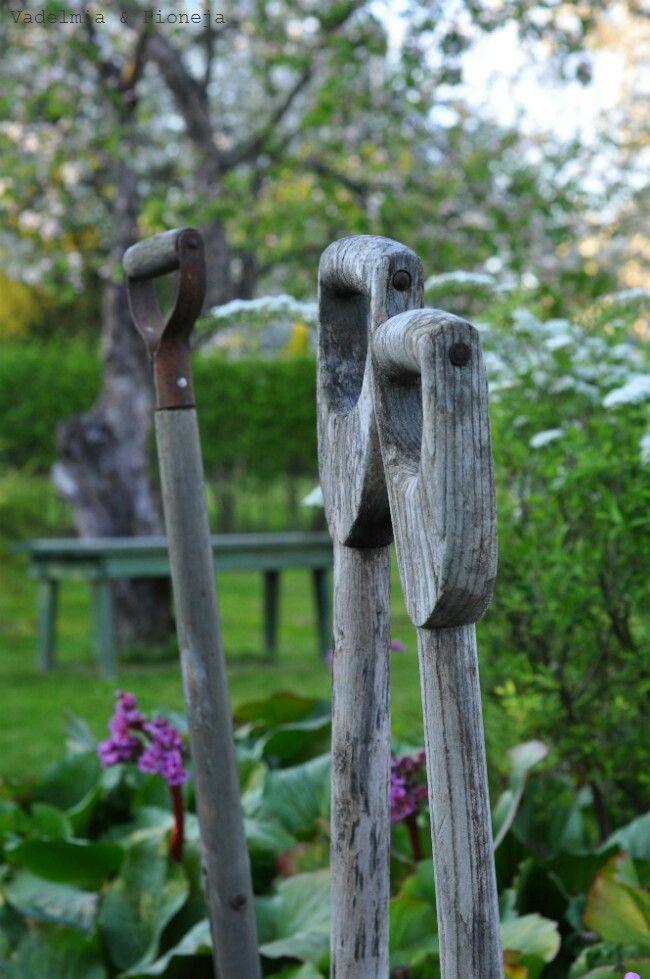 My garden, Vadelmia & Pioneja