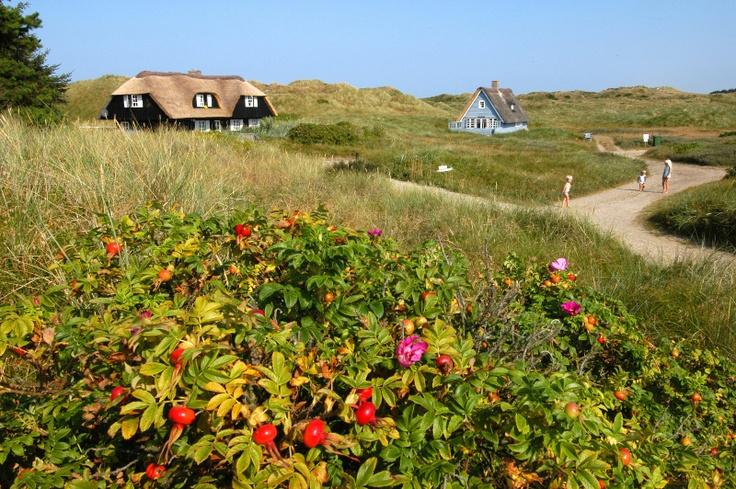 Ferienhäuser im idyllischen Ferienort Henne Strand
