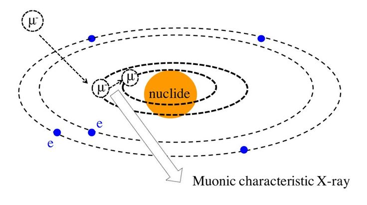 Muon beam analysis of organic matter in samples from space
