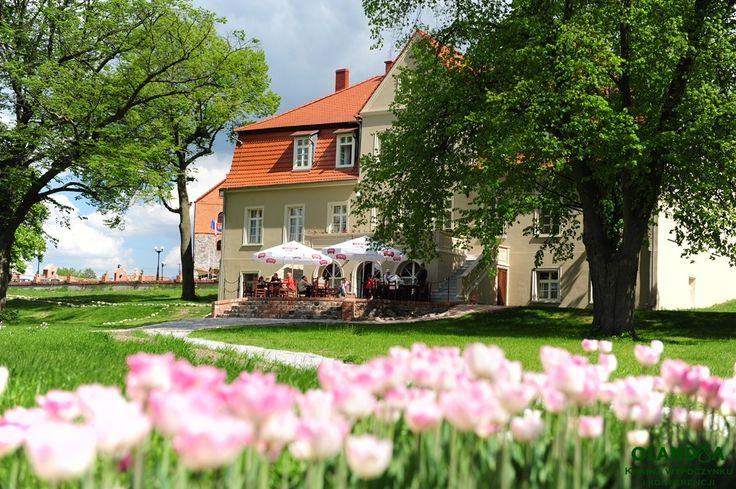 różowe #tulipany w parku #Olandia - jest jak w bajce http://www.olandia.pl