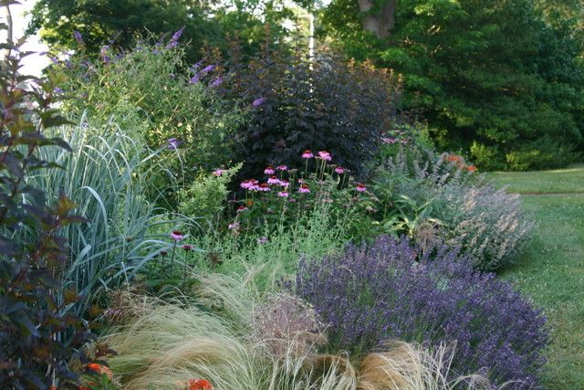 Ornamental grasses in a shrub border inspired garden for Tall grass border