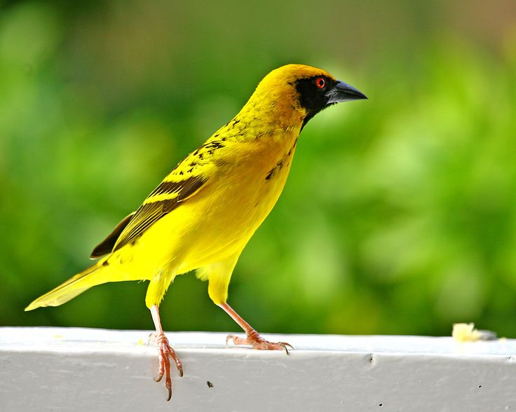 573 best MAURITIUS images on Pinterest Mauritius island
