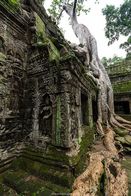 Ta Prohm, Angkor Wat, Cambodia- good lord. Who could create such a complex landscape? Love!