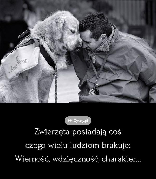 Zwierzęta posiadają coś czego wielu ludziom brakuje: Wierność, wdzięczność, charakter...