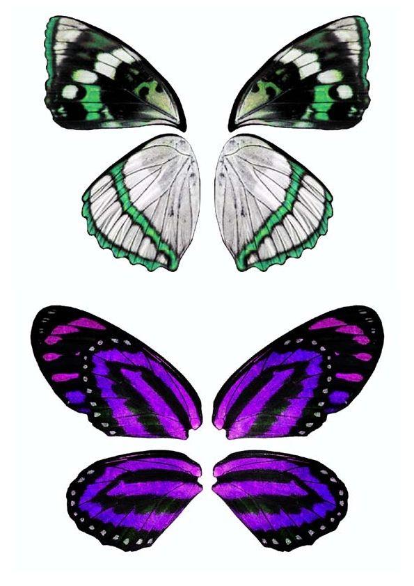 21 best wings images on pinterest angel wings - Plantillas de mariposas ...