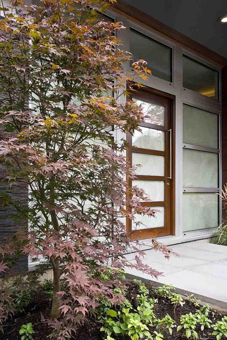 érable du Japon dans le jardinet moderne à côté de la porte d'entrée