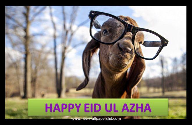 Bakra (Eid Ul Azha) Funny Pictures 2014