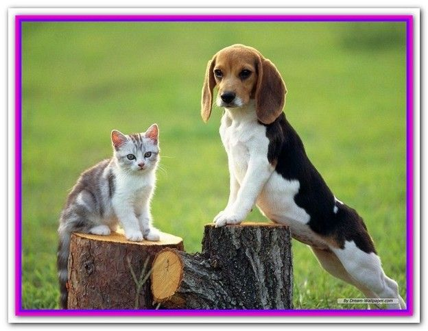 Best Dog Food For Beagle Philippines Cute Beagles Beagle Dog