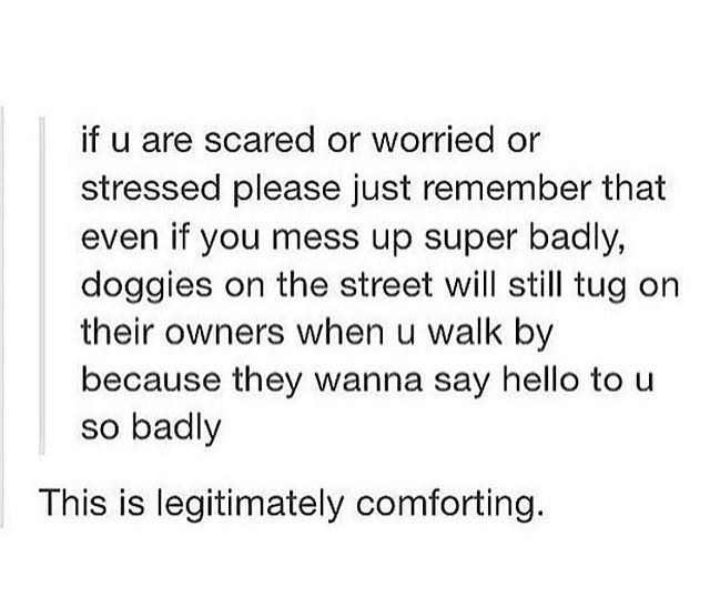 if you are scared or worried or stressed please just remember that even if you mess up super badly, doggies on the street will still tug on their owners when you walk by because they wanna say hello to u so badly // puppy love can cure all