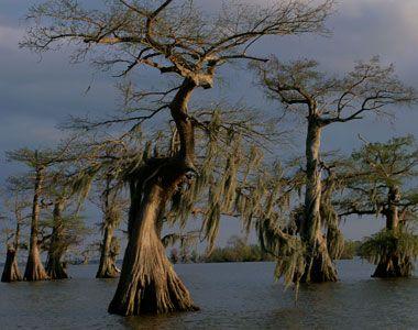 Manchac Swamp Se dice que una reina de vudú encarcelada ha echado una maldición en estos lares acuosos alrededor de la vuelta del siglo pasado, causando la desaparición de tres aldeas con un huracán en 1915.