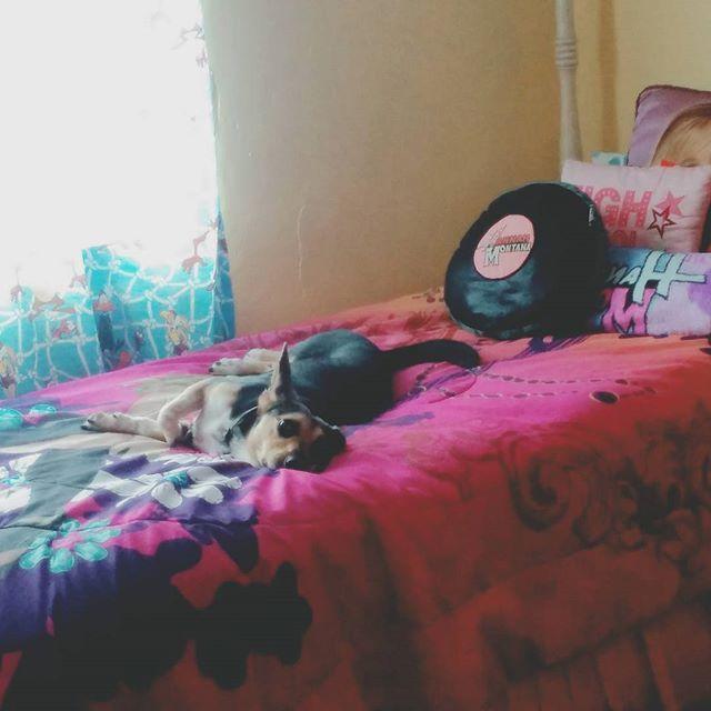 ・ 朝から娘の部屋でまったり🐶💞 まったく動かない #沖縄  #愛犬 #雑種 #dog#instagramdog #元里親犬 #犬のいる暮らし#シャンプーしたて #娘の部屋 #daughter #room #ハンナモンタナ#スマイル #沖縄移住 #南国暮らし #ヴィンテージハウス #外人住宅#フラットハウス