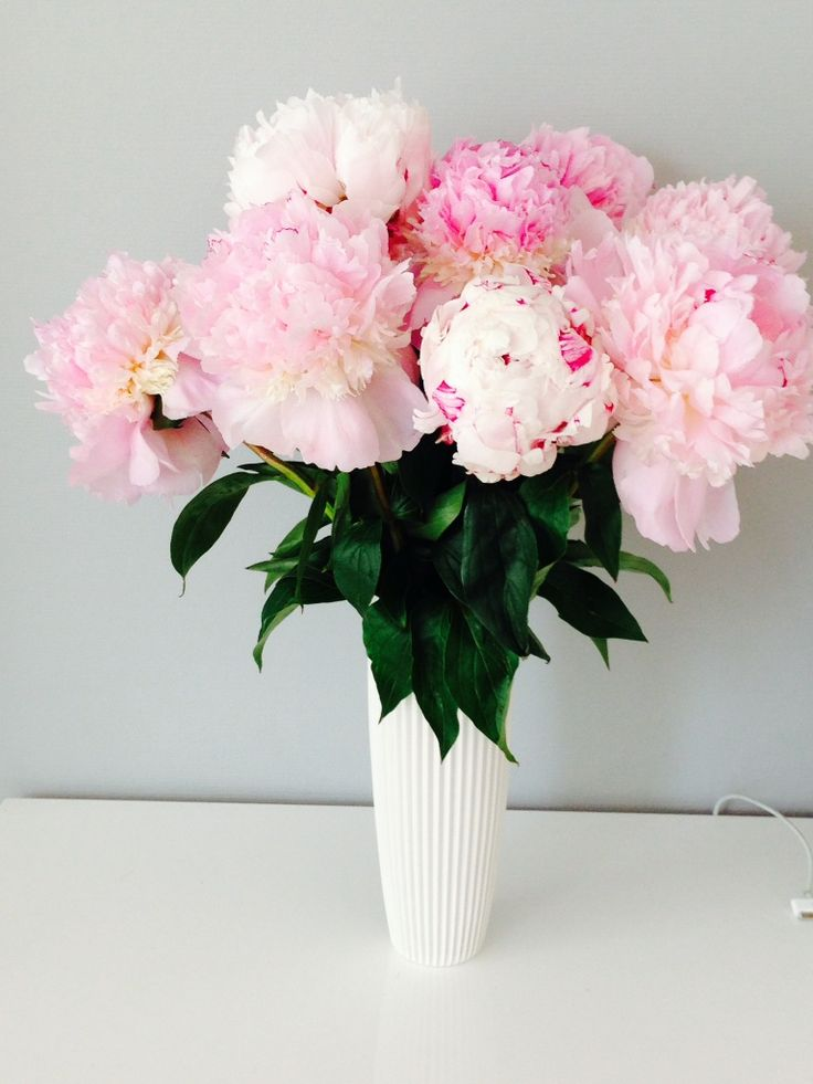 pionit maljakossa | Kukkakauppa Mehitähti