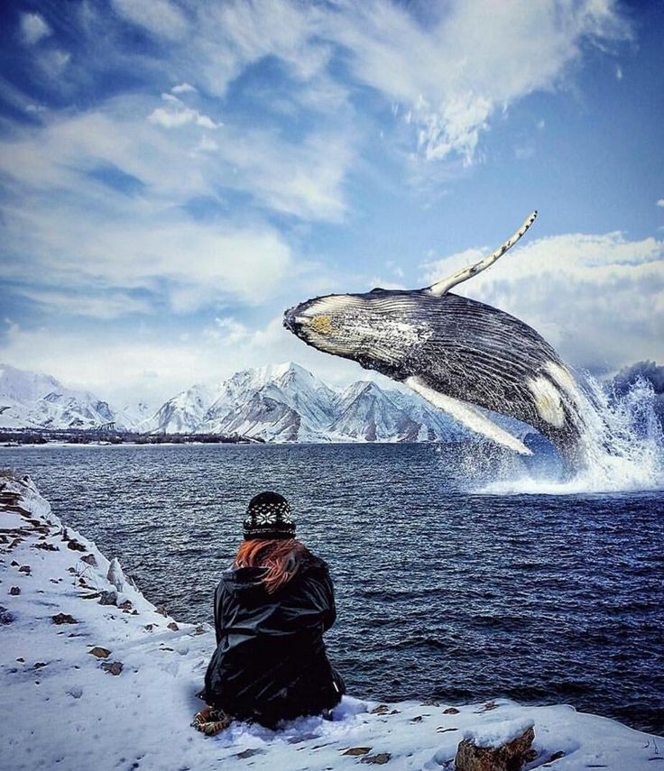Caption This! Location: Antartica Photo by @oziseven At The Right Moment--At The Right Place--At The Right Time