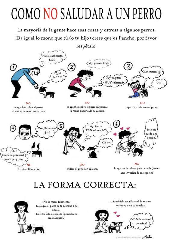 lenguaje animal -verbal o no verbal, Formas correctas e incorrectas de comunicación entre el humano y el perro.