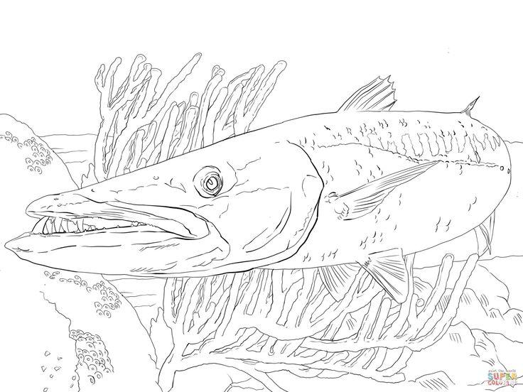 barracuda fish super coloring