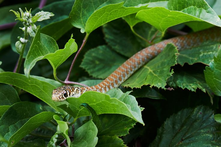orange snake by Stefano Disperati on 500px