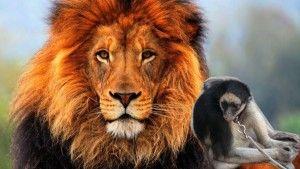 La pelea es de León contra Mono Amarrado
