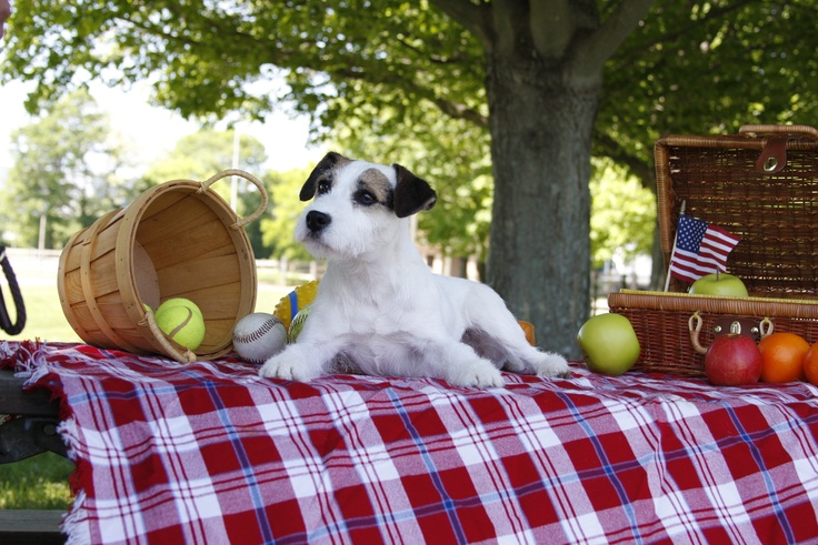 Parson Russell Terrier loving Spring!