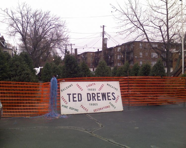 christmas trees!  ted Drewes