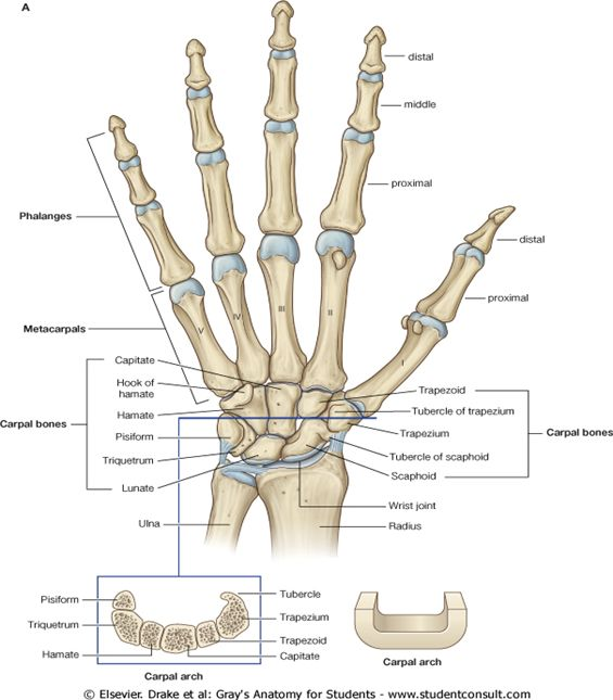 16 best Bones in the Leg images on Pinterest | Human body, Anatomy ...