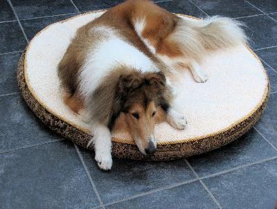 Remedios caseros para que los perros tengan un pelaje brillante | eHow en Español
