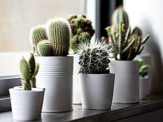 Windowsill Cactus Collection