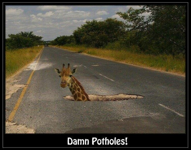 Only in South Africa - HOW DEEP ARE THE HOLES????? - WILL SOMEONE GET HIM OUT!!!!!!!!!