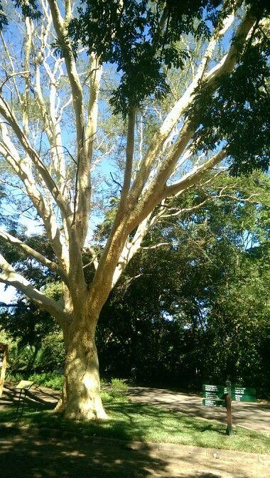 Nelspruit Botanical Gardens in Mpumalanga.