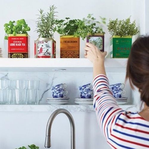 12 Indoor GardeningHacks for Spring, No Yard Required