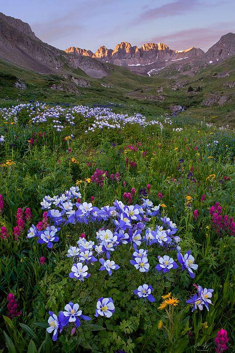 Colorado Sunrise - American Peak with wildflowers in the San Juan Mountains - Fine art prints by Aaron Spong