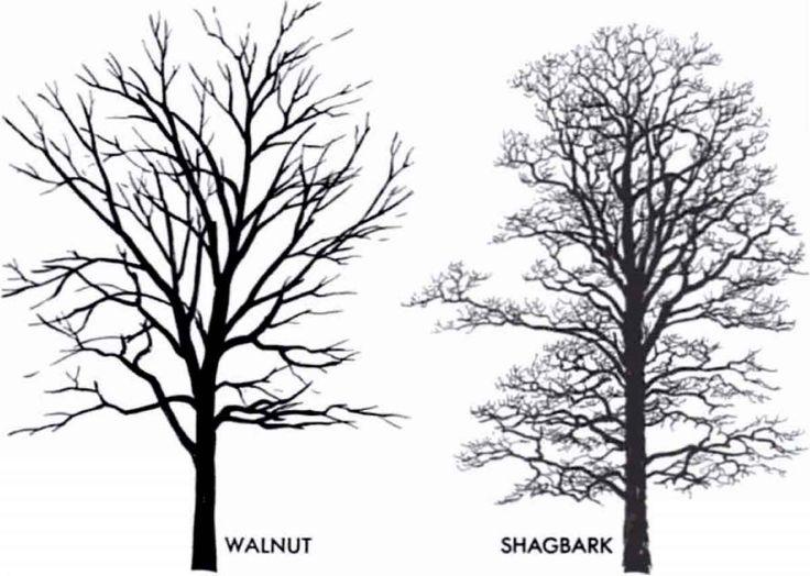 Best 25 Winter Trees Ideas On Pinterest: The 25+ Best Tree Silhouette Ideas On Pinterest