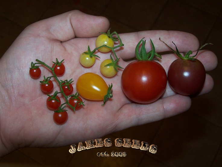 9 best tomato seed mixes images on pinterest tomato for How to grow cherry tomatoes from seeds