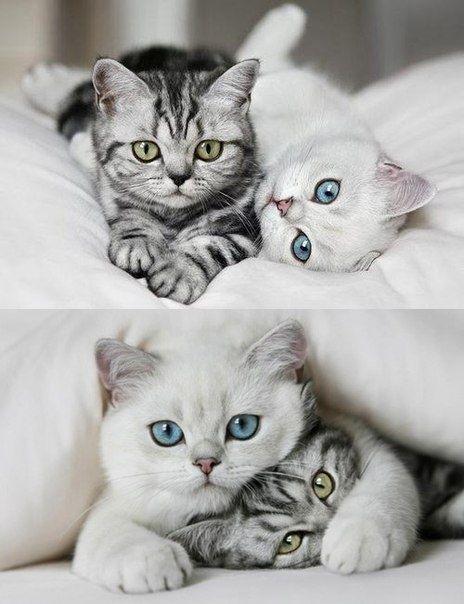 Sweet kittens.