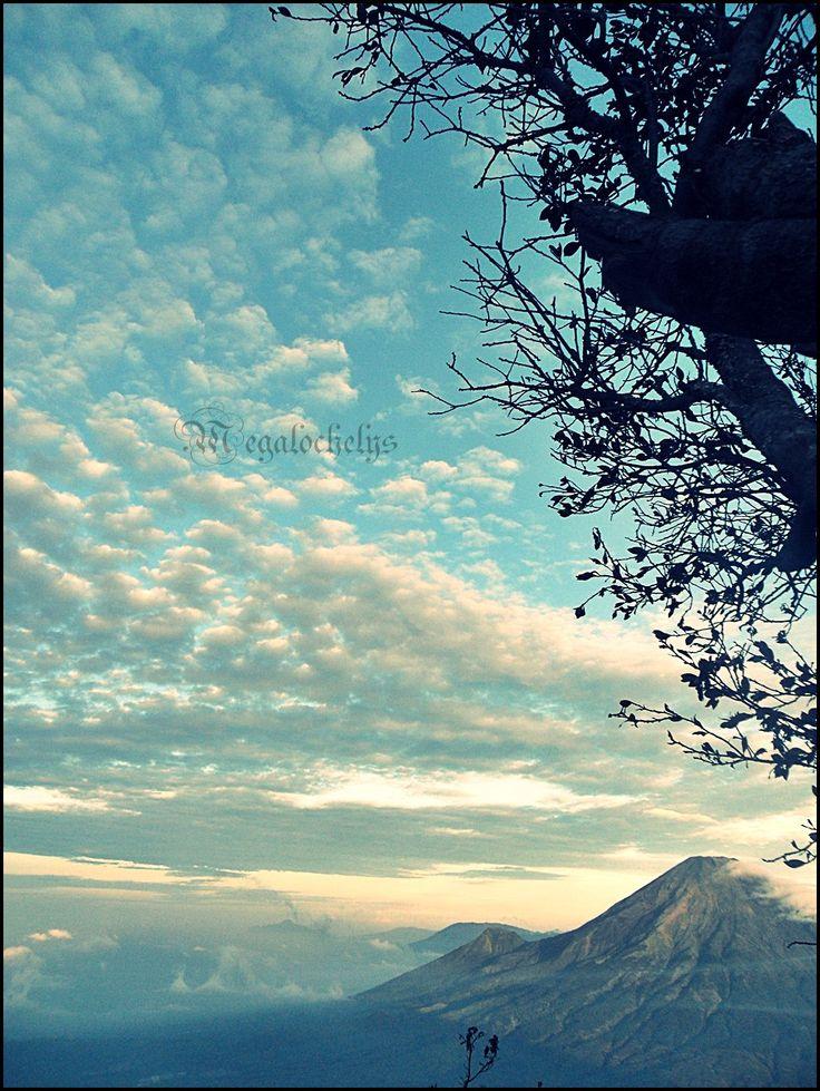 Morning Glory. Mt. Sumbing 3371 mAsl, Jawa Tengah, Indonesia
