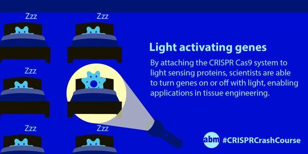 With the help of the CRISPR Cas9 system, scientists from Duke University can activate genes with the flip of a light switch! By attaching one portion of a light sensing protein to the CRISPR Cas9 system and the other portion to a gene activating protein, they were able to modulate genes by shining blue light on the cells. This has exciting potential applications in tissue engineering! #CRISPRCrashCourse #CRISPR