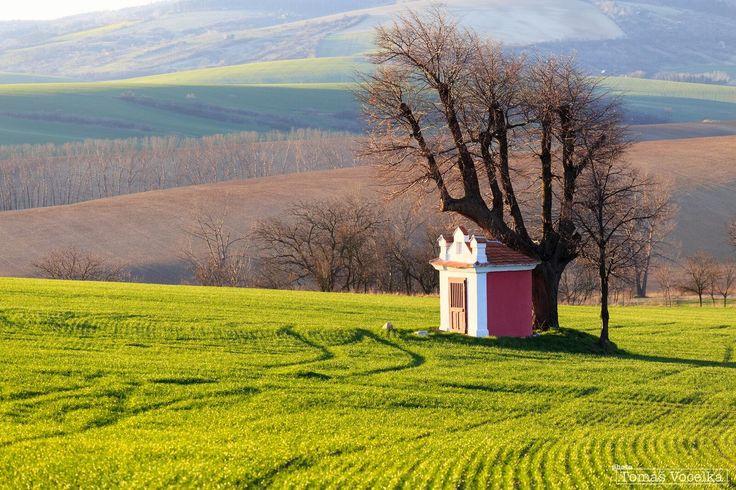 Strom, který působí, jako by chtěl ochraňovat malou polní kapli. Toto místo je na rozdíl od ostatních severně od Kyjova.